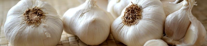garlic にんにく