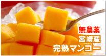 無農薬 宮崎産 完熟マンゴー