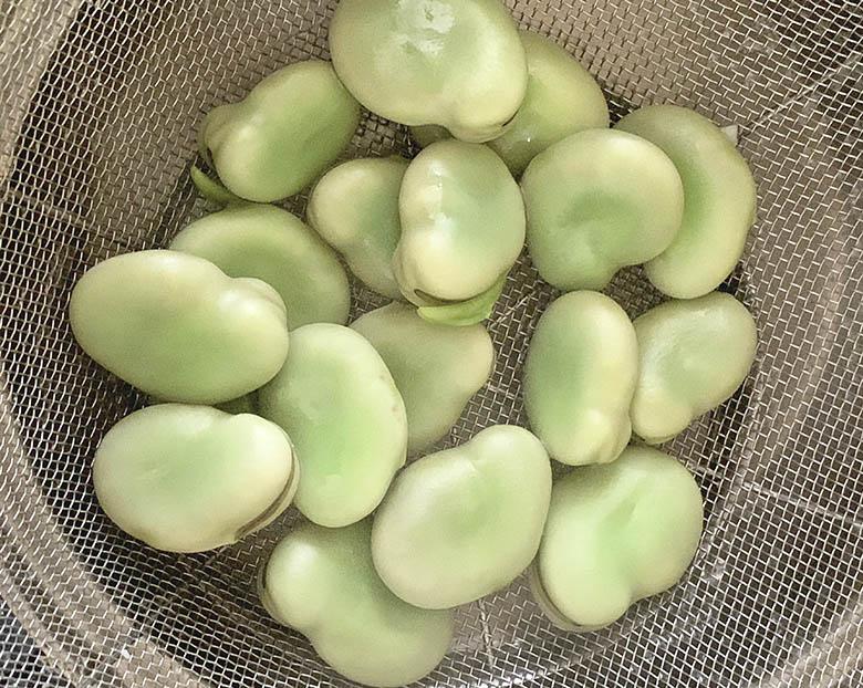 そら豆を茹でてザルに上げる