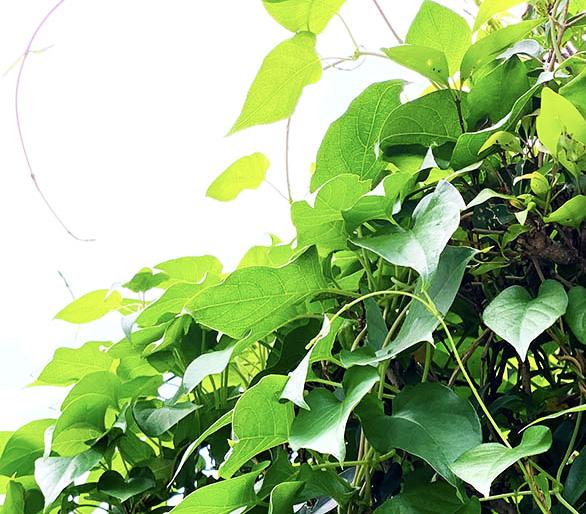 Green(緑/景色)