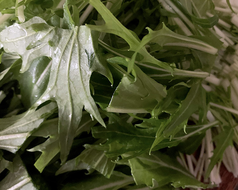 水菜を4~5センチに切る